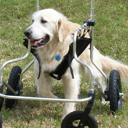 quad_support_dog_wheelchair[1]