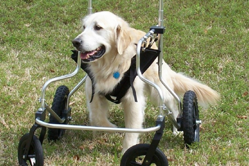 quad_support_dog_wheelchair[1]