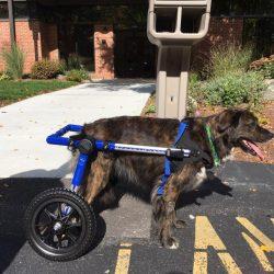 Kylie Wheelchair
