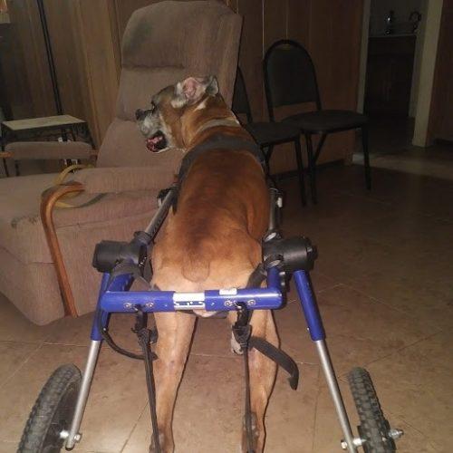 Buddy wheelchair 3