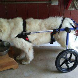 Blancote wheelchair not harness