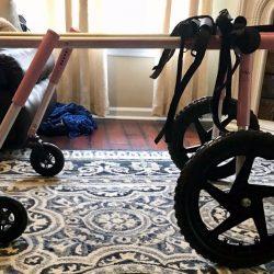 dog wheelchair2