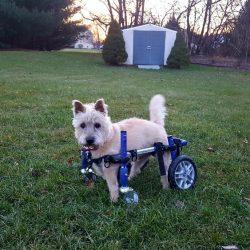 Riley in Wheels Best